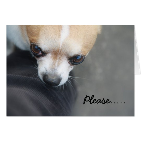 Please.....| Chihuahua Dog Photography Card
