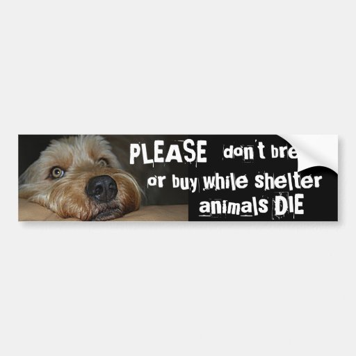 Please Dont Breed Or Buy While Shelter Animals Die Car Bumper Sticker