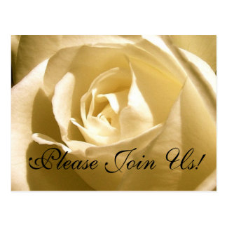 Please Join Us! Invitation Postcard Cream Rose
