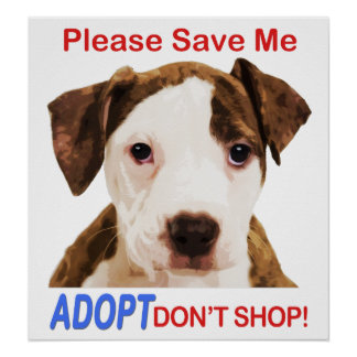 Please Save Me Adopt Don't Shop Poster