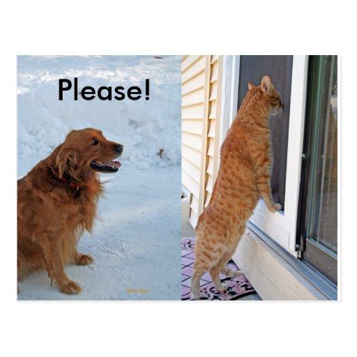 Please!  Spay or Neuter! Postcard