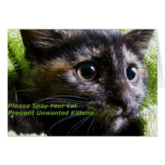 Please Spay Your Cat Prevent Unwanted Kittens Card