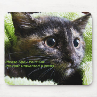 Please Spay Your Cat Prevent Unwanted Kittens Mouse Pad