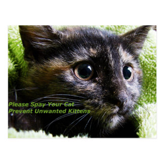 Please Spay Your Cat Prevent Unwanted Kittens Postcard
