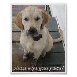 Please Wipe Your Paws! Posters