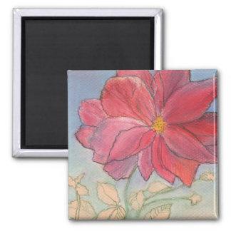 Plena floración color de rosa imán de frigorífico