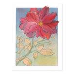 Plena floración color de rosa postal