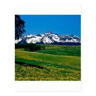 Plena floración San Juan Ains Colorado del parque Tarjeta Postal