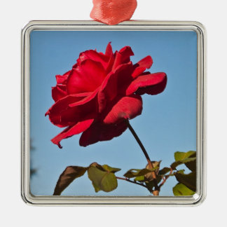 Plena floración subió en el Rose Bowl, Pasadena Adorno Cuadrado Plateado