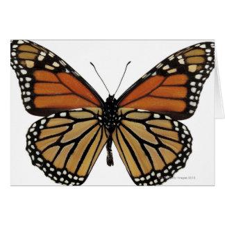 Plexippus Danaus Butterfly Card