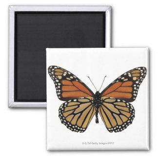 Plexippus Danaus Butterfly 2 Inch Square Magnet