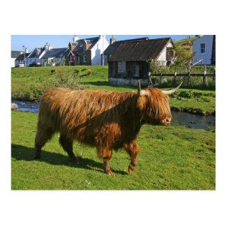 Plockton Escocia El hacer de Coooo melenudo vac Tarjeta Postal