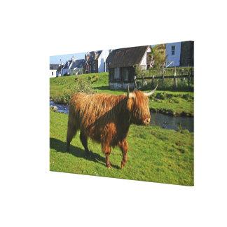 Plockton, Scotland. Hairy Coooo's (cows) doing Canvas Print