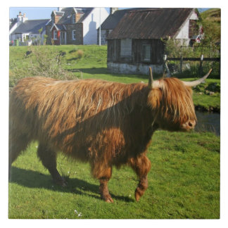 Plockton, Scotland. Hairy Coooo's (cows) doing Ceramic Tile