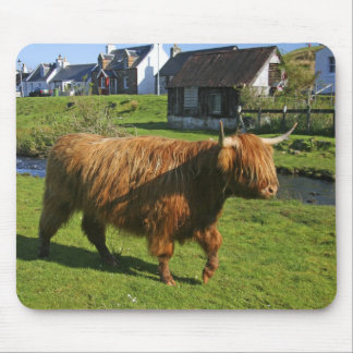 Plockton, Scotland. Hairy Coooo's (cows) doing Mouse Pad