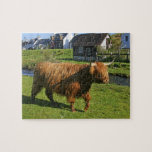 Plockton, Scotland. Hairy Coooo's (cows) doing Puzzles