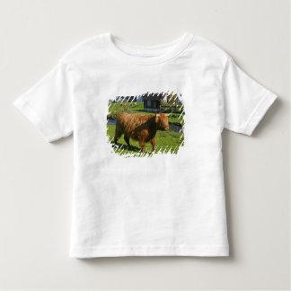 Plockton, Scotland. Hairy Coooo's (cows) doing Toddler T-shirt