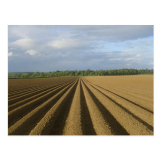 Ploughed field postcard