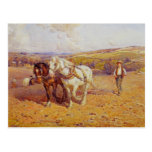 Ploughing Post Cards