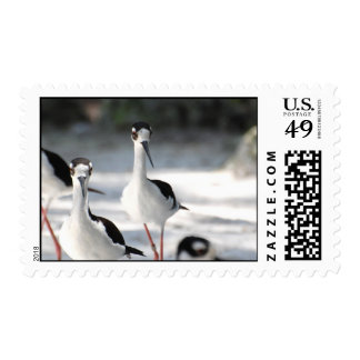 Plovers Stamps