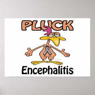 Pluck Encephalitis Awareness Design Posters