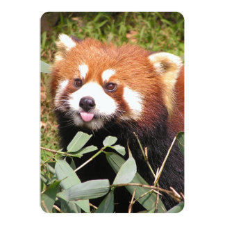 Plucky Red Panda Eats Bamboo, Makes Funny Face 5x7 Paper Invitation Card