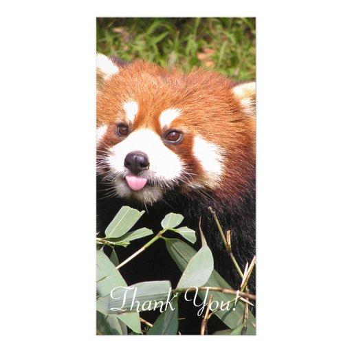 Plucky Red Panda Eats Bamboo, Makes Funny Face Card | Zazzle