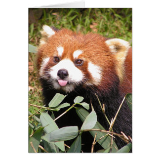 Plucky Red Panda Eats Bamboo, Makes Funny Face Greeting Card