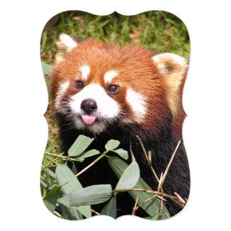 Plucky Red Panda Eats Bamboo, Makes Funny Face Card