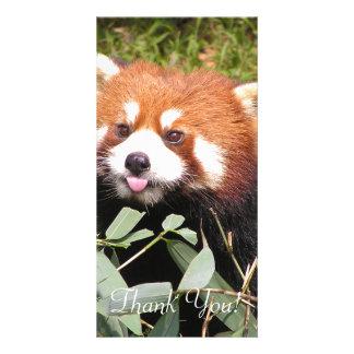 Plucky Red Panda Eats Bamboo, Makes Funny Face Photo Card