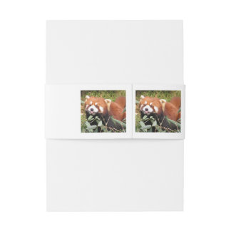 Plucky Red Panda Eats Bamboo, Makes Funny Face Invitation Belly Band