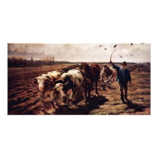 Plügende Ox By Koller Rudolf (Best Quality) Photo Card