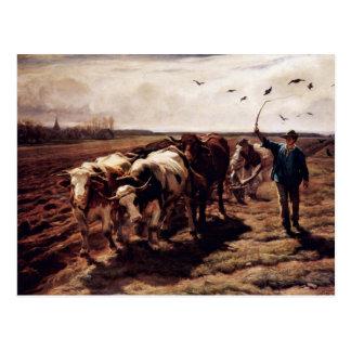 Plügende Ox By Koller Rudolf (Best Quality) Post Cards