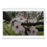 Plum Blossom Greeting Greeting Card