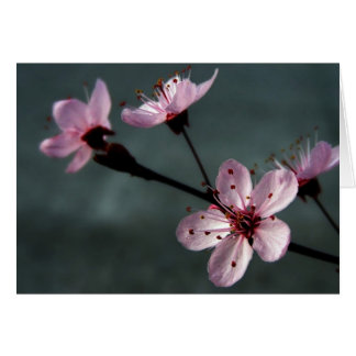 plum-blossoming-wallpapers_9522_1024x768 card