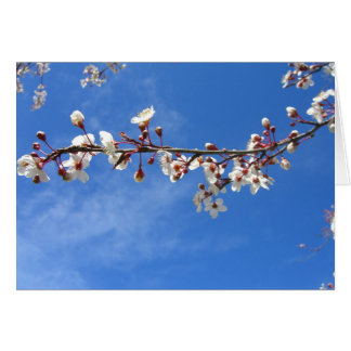Plum Blossoms, Blue Sky Cards