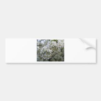 Plum Blossoms Bumper Stickers