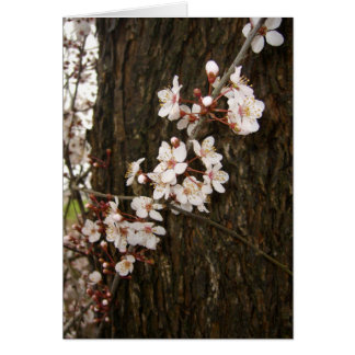 Plum Blossoms Cards
