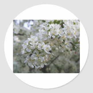 Plum Blossoms Classic Round Sticker