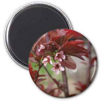 plum blossoms magnet