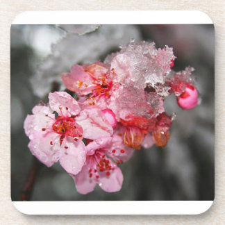 Plum Blossoms & Snow Coaster