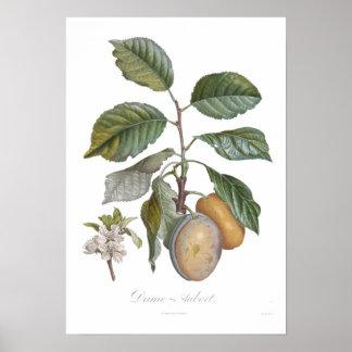 Plum,Dame-Aubert Print