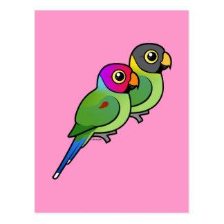 Plum-headed Parakeet Pair Postcard