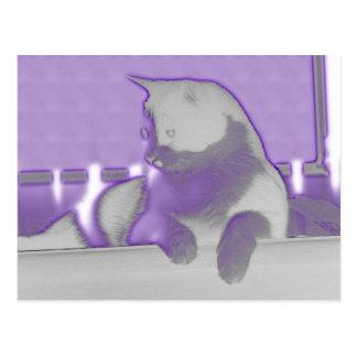 Plum Puss 149 Postcard
