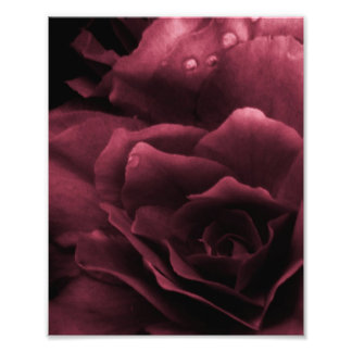 Plum Red Close Up of a Double Begonia Photographic Print