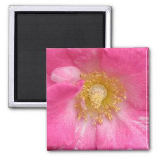 Plum Rose Macro 2 Inch Square Magnet