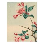 Plum tree blossoms 2012 Calendar Postcard