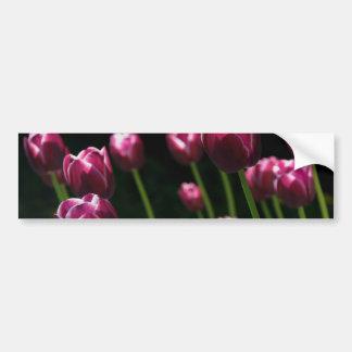 Plum Tulips Bumper Sticker