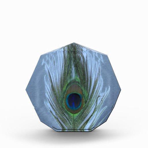 Pluma azul D del pavo real