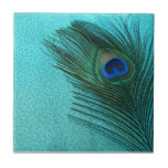 Pluma azul del pavo real de la aguamarina metálica tejas